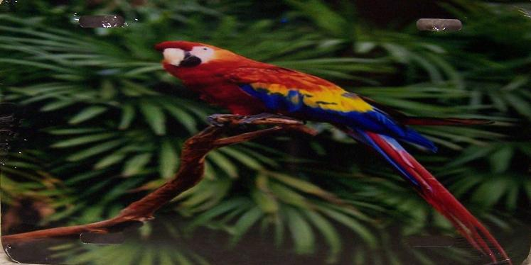 Scarlet Macaw Aluminum License Plate Birds and Animals thumbnail