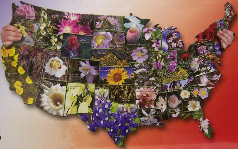 Puzzle state flowers of the usa in the shape of the usa 1000 pc nib