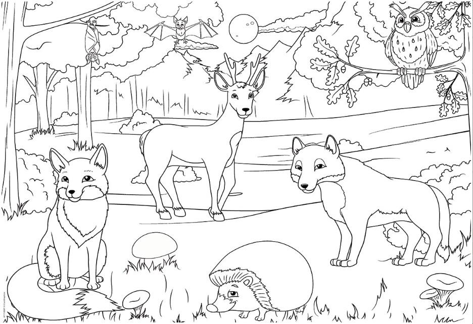 салоник нарисовать рисунок животные лесов россии девочки